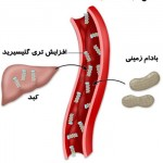 عوارض تری گلیسیرید بالای خون