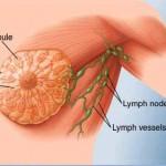 هورمون استروژن و رشد و تکامل پستان ها